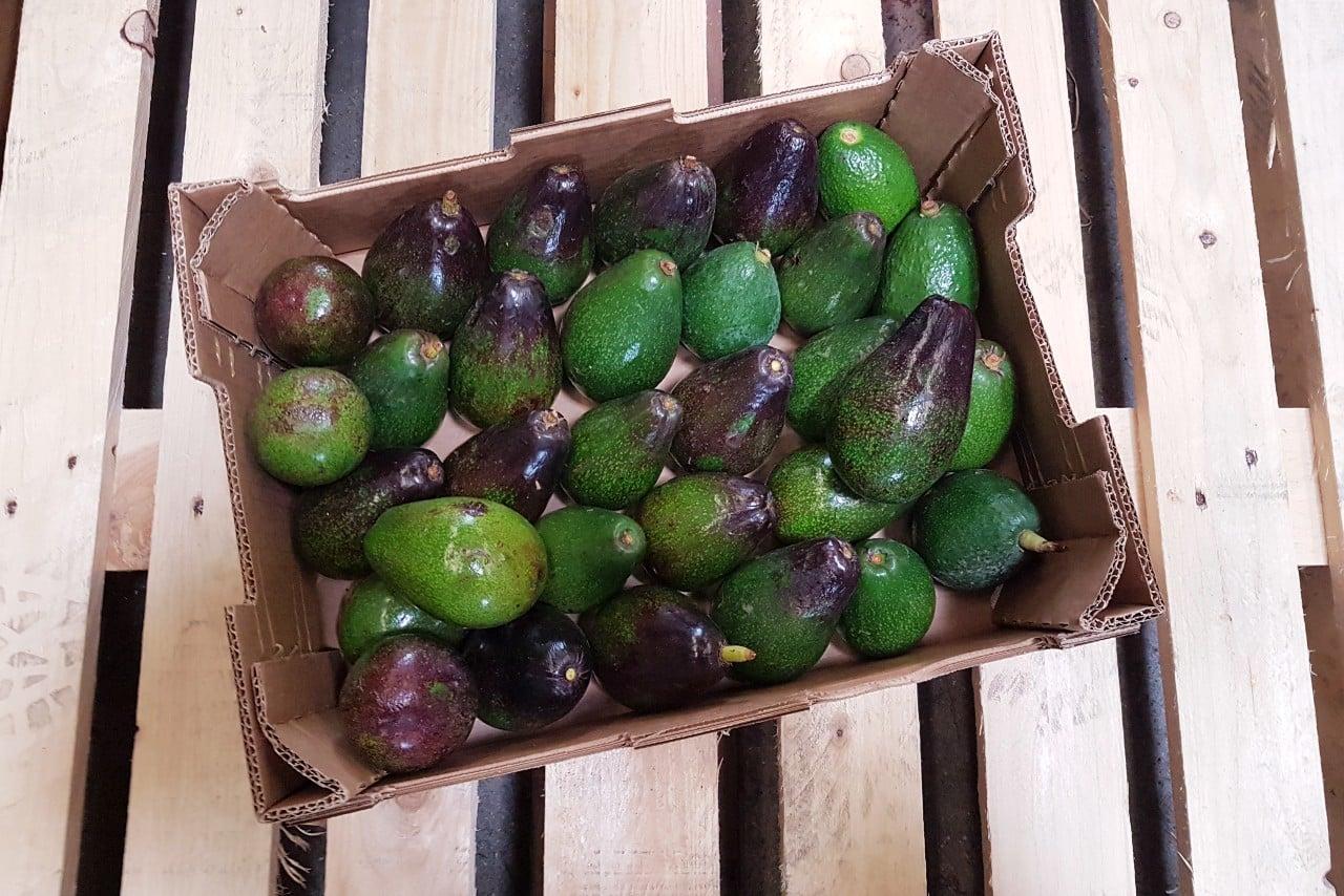 avocado spanien kaufen