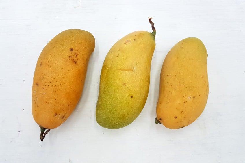 mango francis kaufen