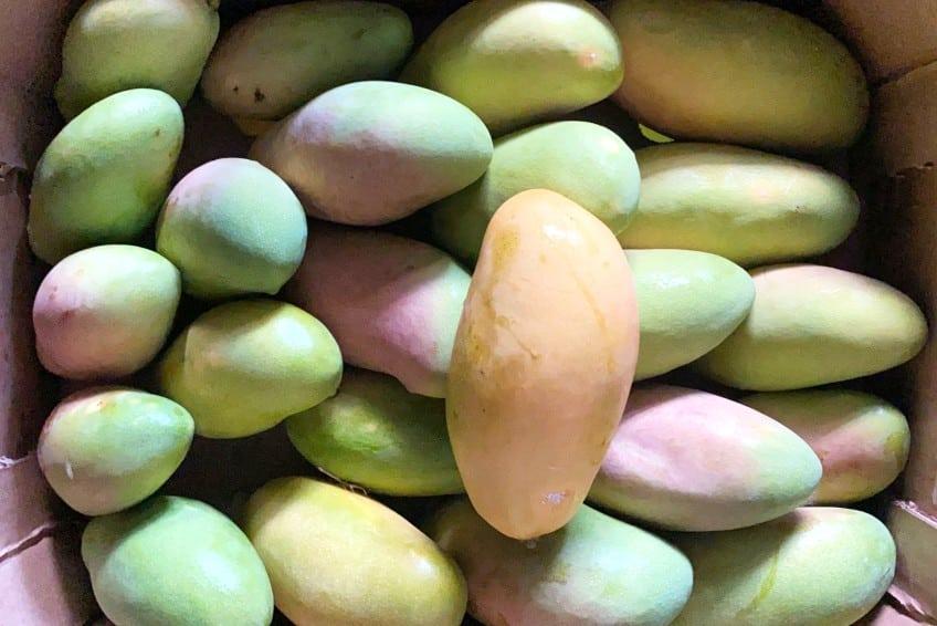 mango madame francis kaufen