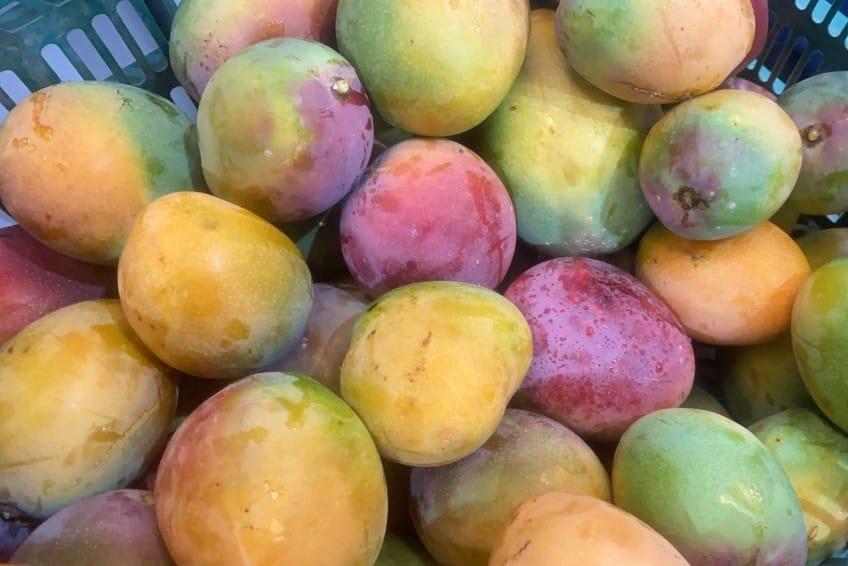 mangos kaufen