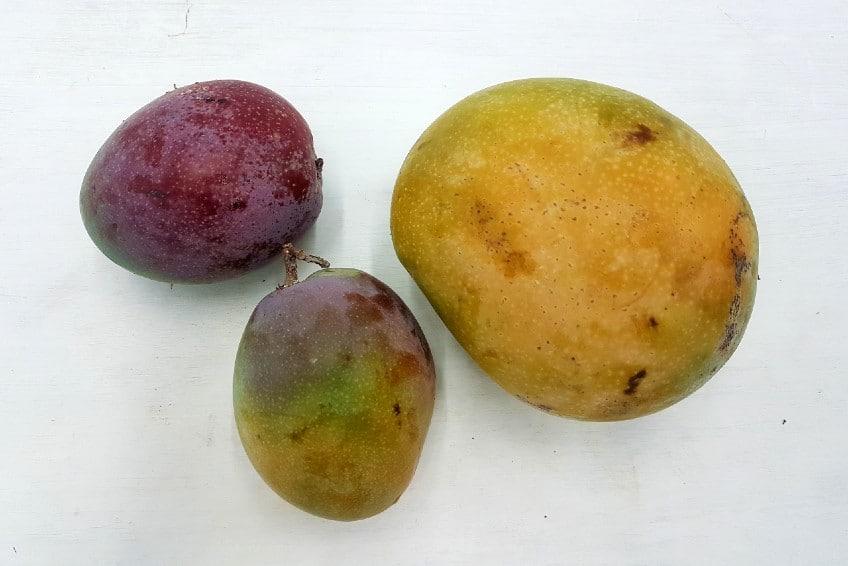 mango direkt vom erzeuger kaufen